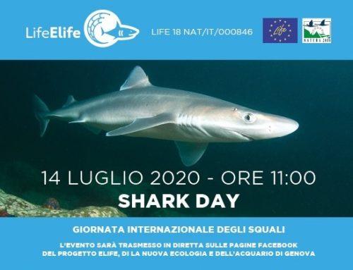 Webinar Elife per la Giornata mondiale degli squali