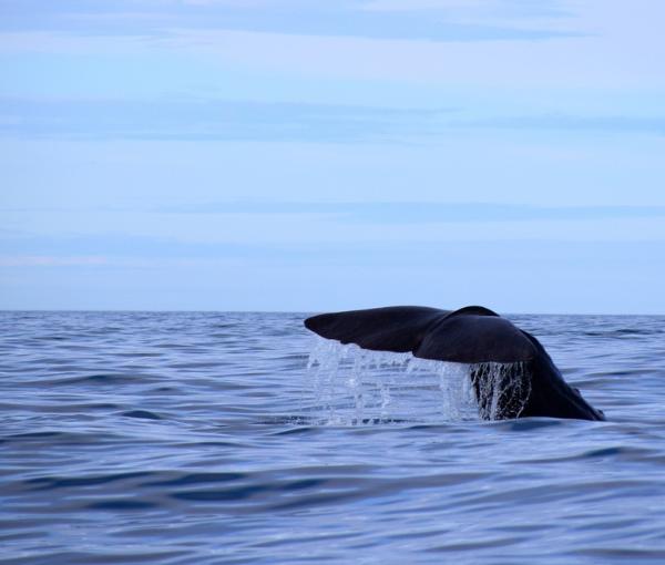 whalesafe
